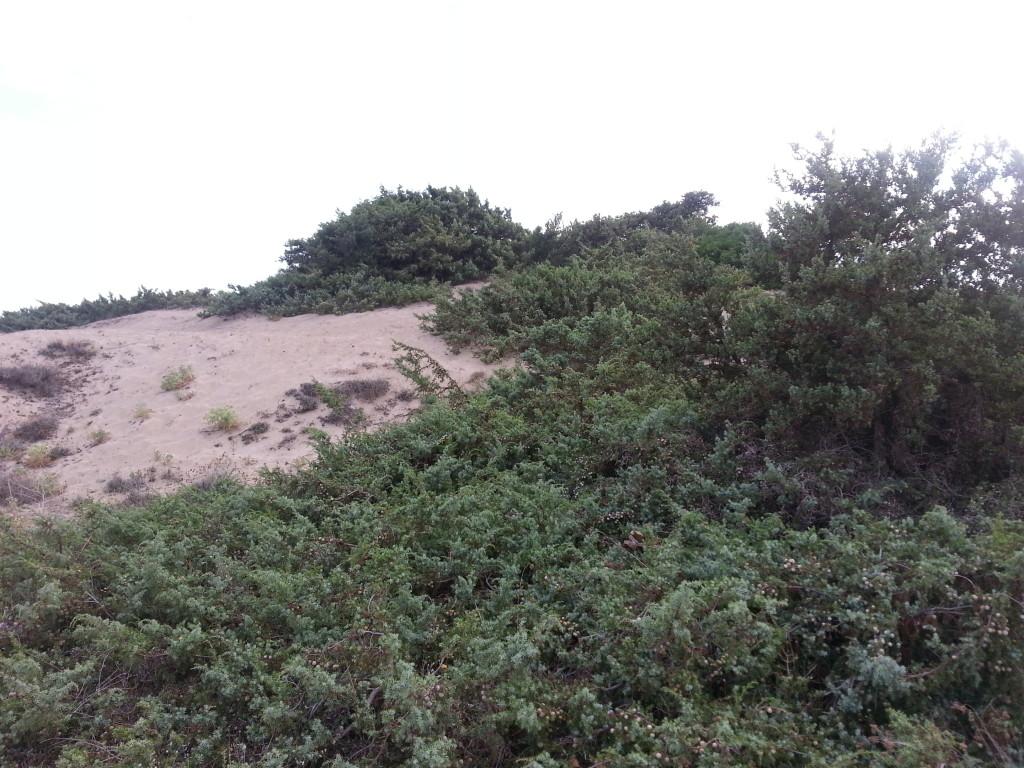 san pietro bevagna dune