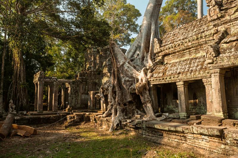 Angkor Ta-Phrom-cambogia
