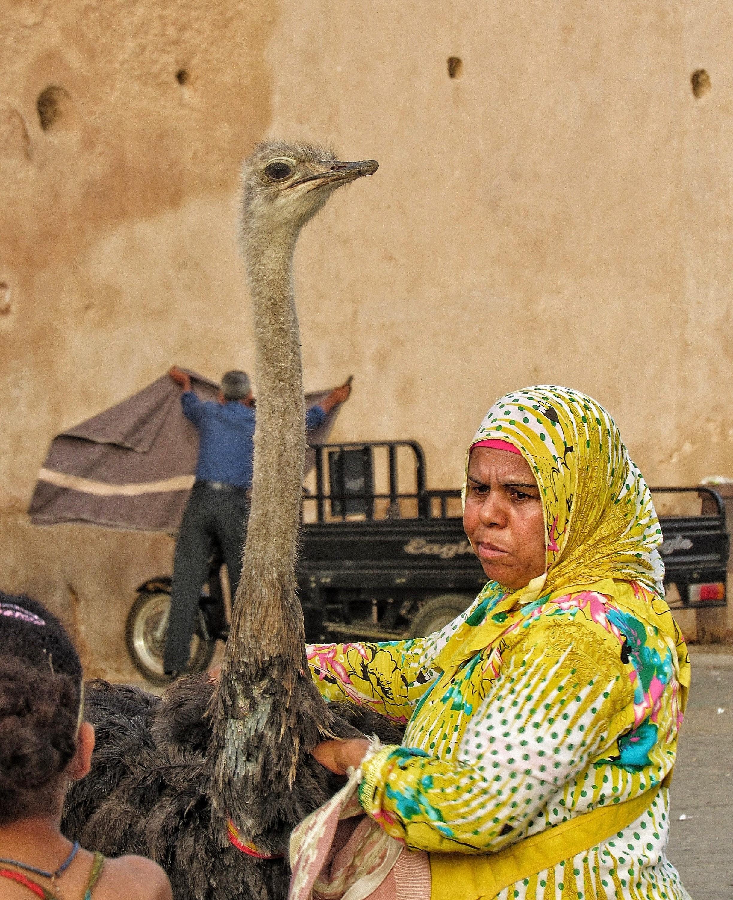 marocco meknes