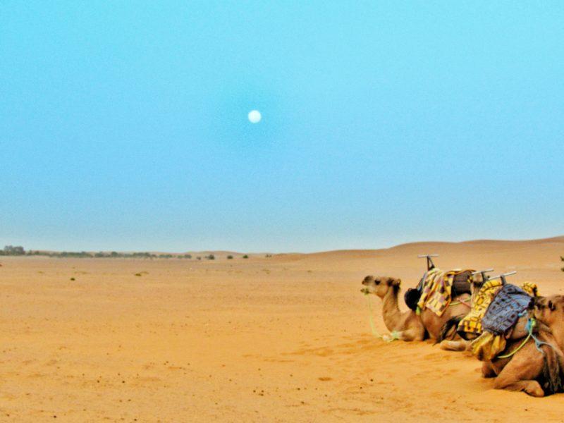 marocco deserto cammelli