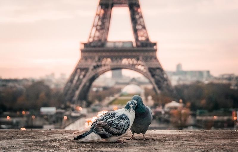 parigi panoramica torre